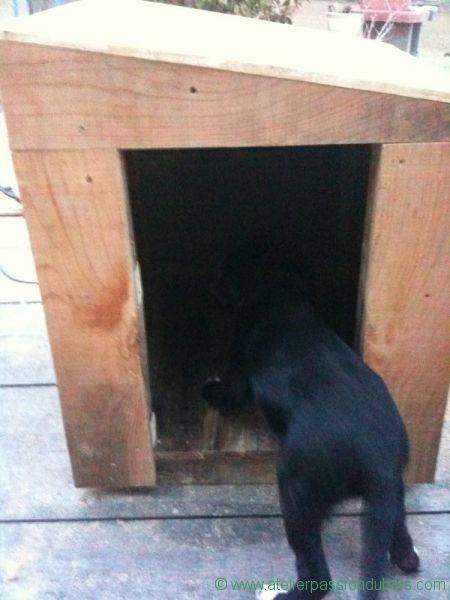niche bois chien